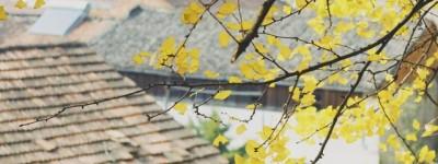 黄塑芹:倾听娥皇女英老地方的雨